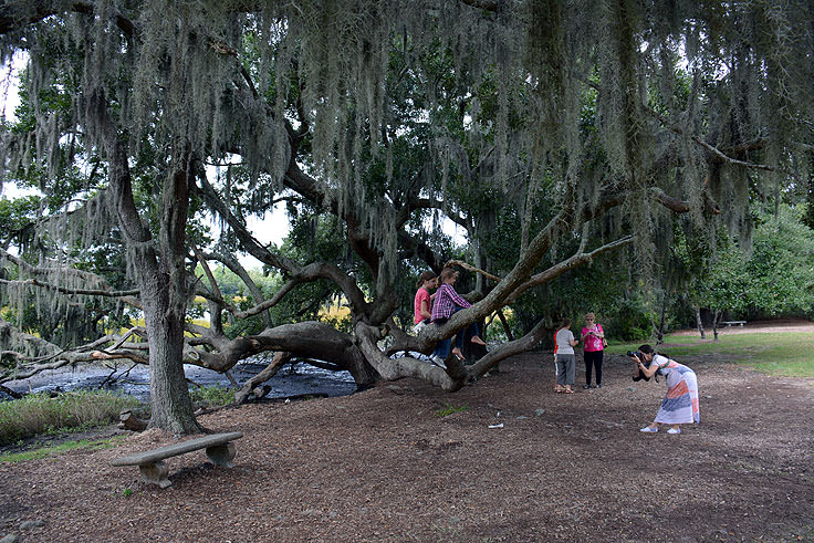 Photos on a live oak at Boone Hall Plantation, Mt. Pleasant, SC